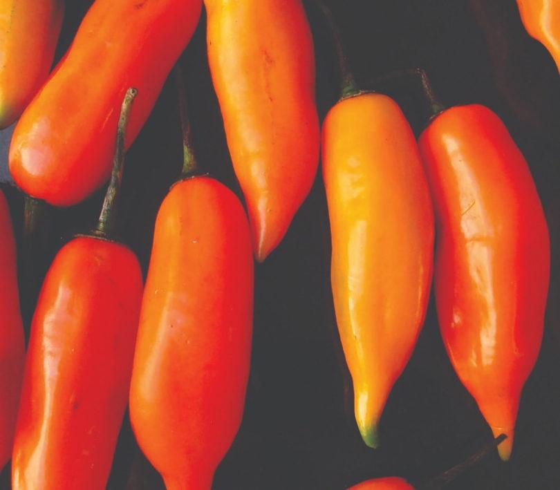 Pimenta Aji Amarillo